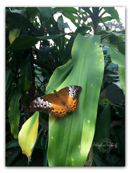 Butterfly Cairns CR2