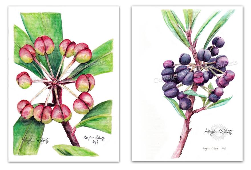 Pepperberry Bush