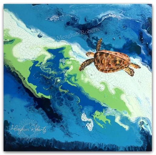 Pour Milieu Turtle CR