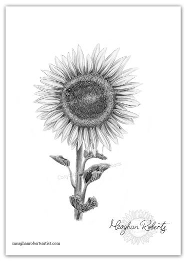 Sunflower BW